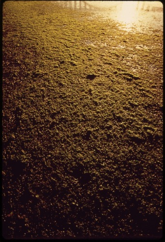 SEA_ALGAE_ON_ESTUARY_OF_ROGUE_RIVER_-_NARA_-_545115.tif