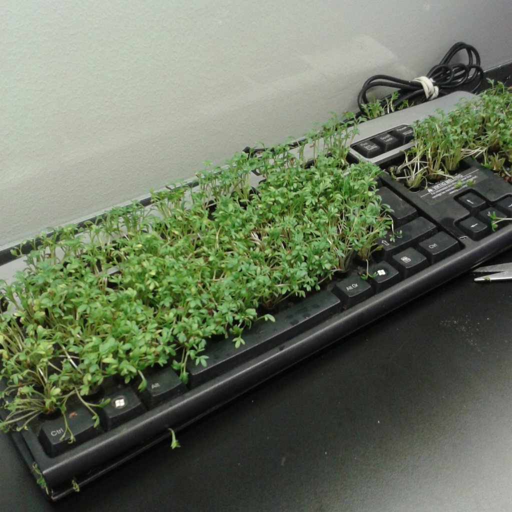 sprouting keyboard 2.0